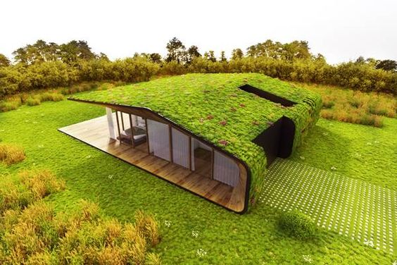 плоская крыша-газон