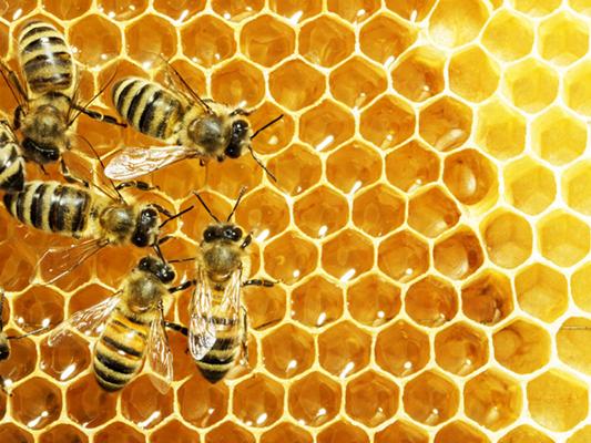 пчелиные соты как пример домов-гексагонов