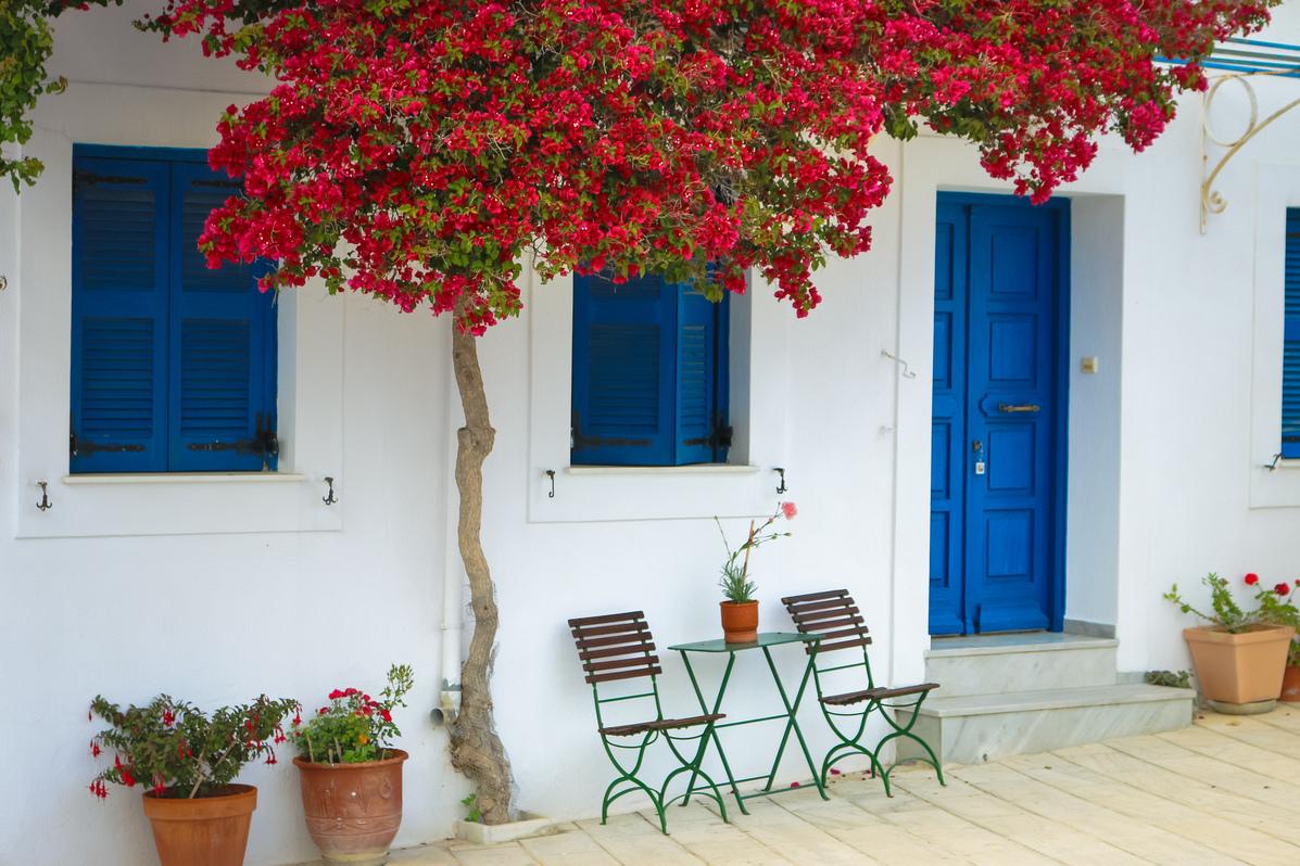 цветы в греческом доме