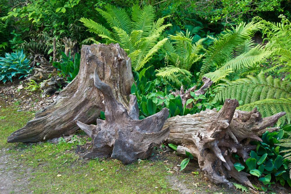 Рутарий — композиция из натуральных материалов для сада в канадском доме